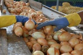 La producción de cebollas disminuyó por cuestiones climáticas.