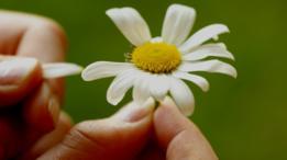 La respuesta no está en el pétalo de una flor.