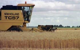 El trigo tiene un mercado clave en Brasil