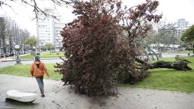 Los destrozos que quedaron en Mar del Plata luego del temporal