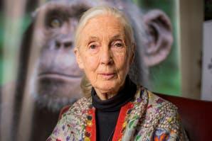 """Jane Goodall: """"Cada pequeña especie tiene un rol que interpretar"""""""