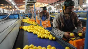 Los limones argentinos ya pueden ingresar a EE.UU.