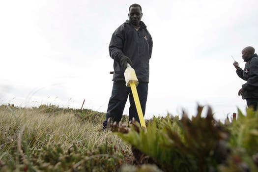 Los especialistas en remoción de minas llegados de Zimbawe trabajan en campos que están alambrados desde los años 80 por riesgo de explosiones. Foto: LA NACION / Mauro V. Rizzi / Enviado especial