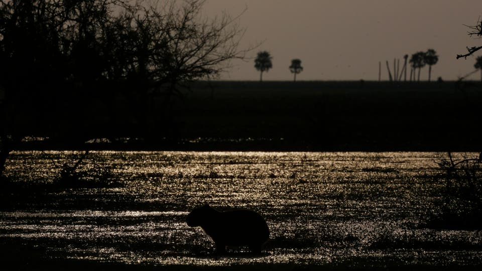 Esteros del Iberá. Foto: LA NACION / Ricardo Pristupluk / Enviado especial