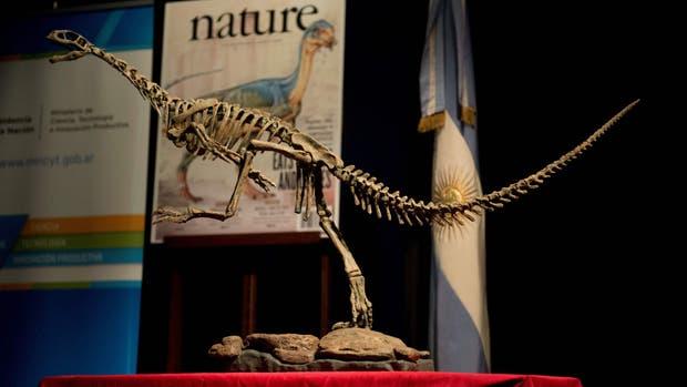 CHILE: Chilesaurio sería el eslabón perdido de los dinosaurios