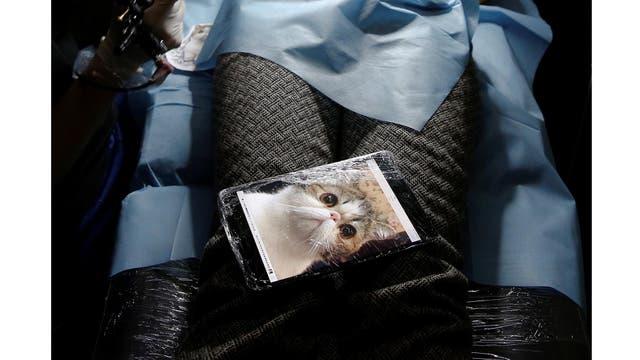 Wang Jing, tiene la foto de su mascota que quiere como tauaje