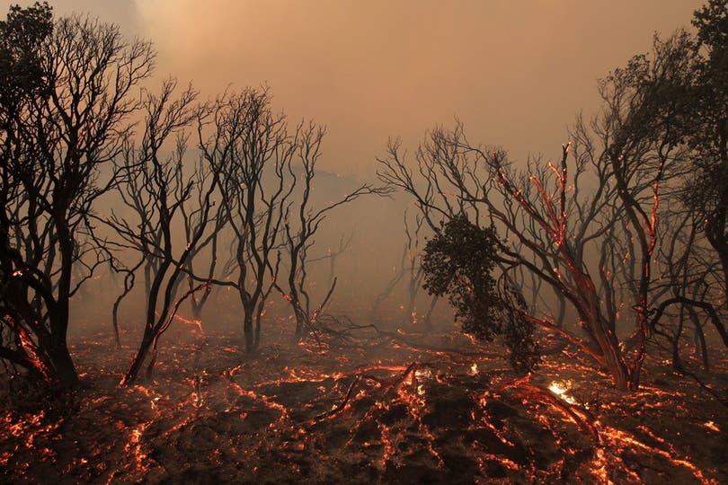 Vista de las raices de los árboles consumidas por el fuego. Foto: AFP