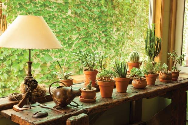 Las macetas de las que habla Patricia descansan en una mesa de carpintero que perteneció al bisabuelo de su marido..  Foto:Living /Javier Csecs