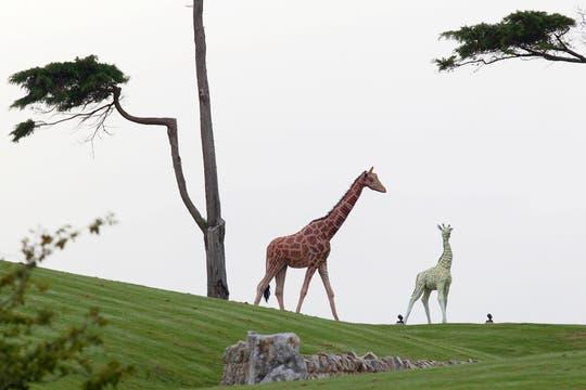 Estatuas de jirafas en el patio de la mansión. Foto: Reuters