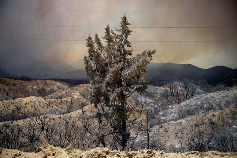 Vista de una zona arrasada por el fuego en Santa Clarita. Foto: EFE