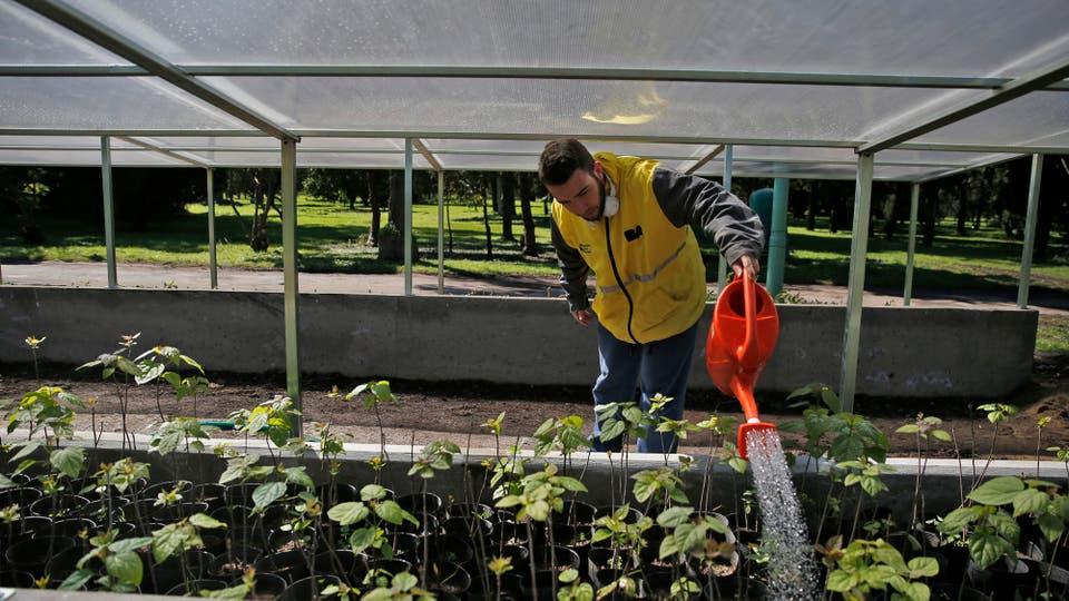 El cuidado de las flores y plantas es constante y está todo muy controlado. Foto: LA NACION / Silvana Colombo