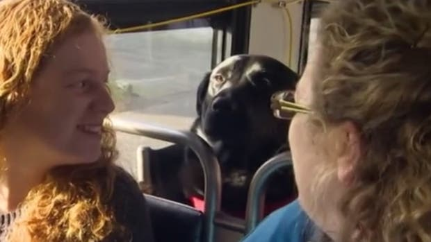 La perra sensación que toma un bus desde su casa al parque