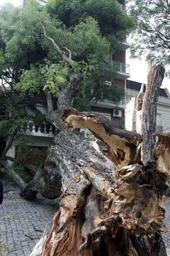 Una fuerte tormenta de viento y lluvia cayó sobre Buenos Aires causando graves daños. Foto: DyN