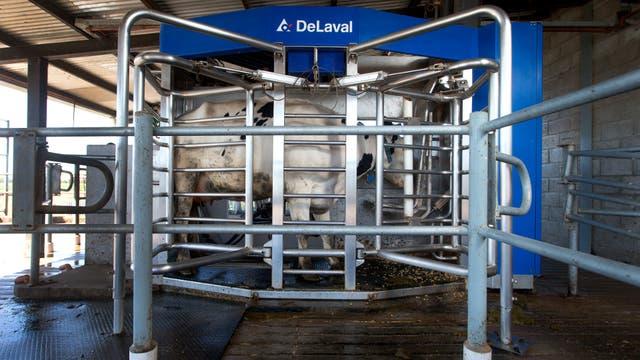 La comida en el robot constituye uno de los atractivos para que la vaca se retire de la pastura y quiera ir a ordeñarse