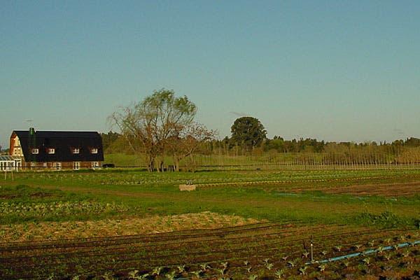 El campo donde se cultivan los productos.