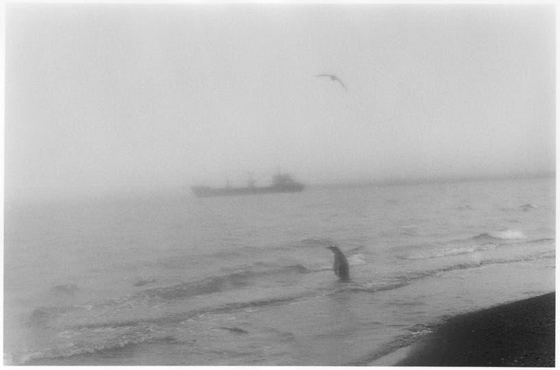 6.Ese barco es el Beagle, el que nos llevó a Decepción desde la base chilena Frei y que nos trajo de regreso a Ushuaia, atravesando el estrecho de Drake, la unión de los dos océanos. La imagen es como de sueño. Transmite cierta calma.. Foto: Adriana Lestido