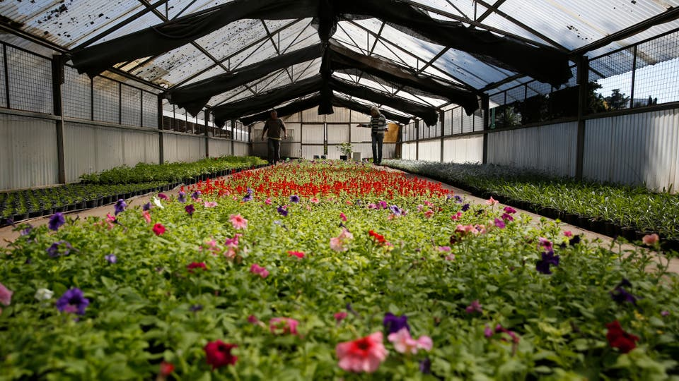 El sector de las flores una vez llegada la primavera, está listo para ser repartido en las plazas y parques de la ciudad. Foto: LA NACION / Silvana Colombo