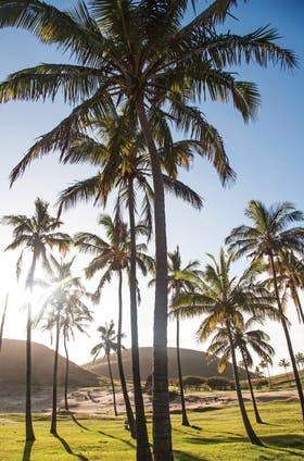 Pascua es una isla tropical en la que la mayoría de las especies fueron introducidas