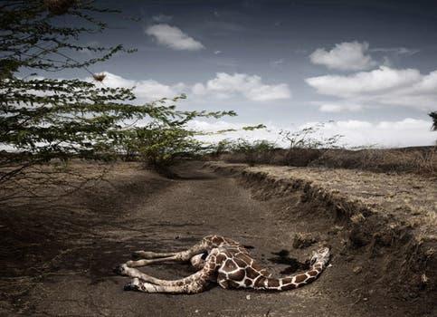 En la categoría Temas Contemporáneos, el segundo premio fue para el italiano Stefano De Luigi, por su trabajo en Kenia. Foto: EFE