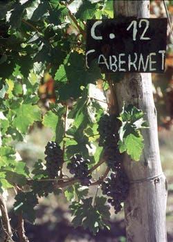 El avance de los barrios privados empuja a los emprendimientos vitivinicolas, poniendo en riesgo áreas cultivables y su principal recurso de producción: el agua