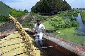 Los excesos de precipitaciones afectaron la cosecha