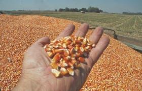 Fuerte caída del precio del cereal en Rosario