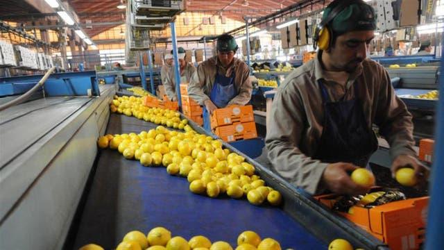 La Argentina es el principal productor del mundo de la fruta