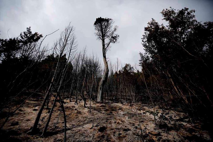 Vista de lo quedó tras el paso del desvastador fuego en la zona de Lago Puelo. Foto: LA NACION / Emiliano Lasalvia