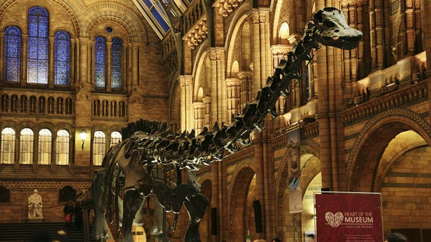 El hall del Museo de Historia Natural de Londres