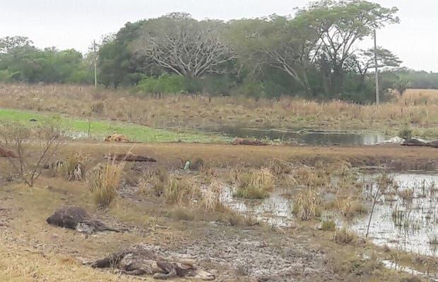 Un campo con hacienda muerta en Caá Catí, en el departamento General Paz