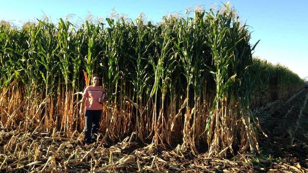Luciano Vázquez, en un lote de maíz producido en el campo