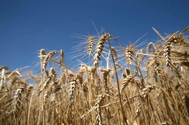 La plataforma incluye propuestas de inversión agropecuarias para pequeños y medianos ahorristas