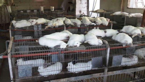Arriba de las jaulas, parte de los conejos que murieron en la zona de Montecristo