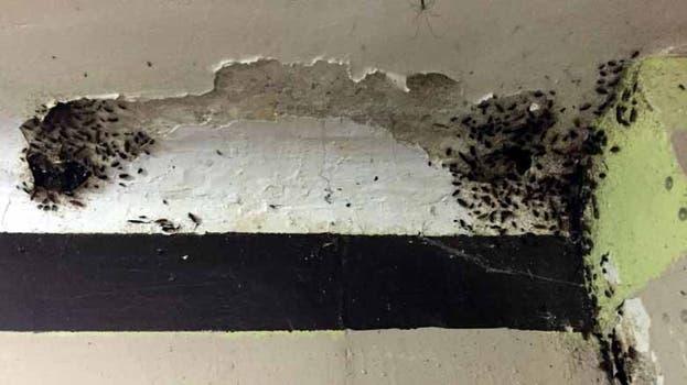 Durante el recorrido se descubrieron insectos en varios sectores, lo que demuestra una fumigación ineficiente. Foto: Gentileza Sistema Interinstitucional de Control de Cárceles