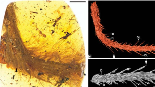 Resultado de imagen para encuentran cola de dinosaurio fosilizada en ambar
