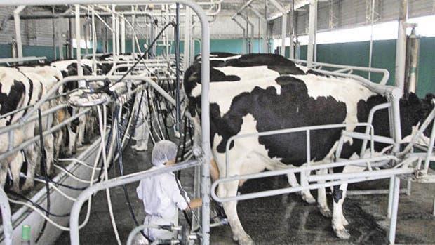 El precio de la leche en el país es el segundo más caro del mundo