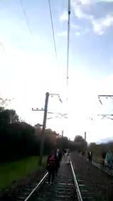 El tren Roca, con servicio reducido hasta Berazategui por la caída de un árbol