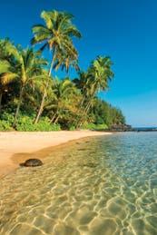 ¿Surf o relax? qué isla elegir si viajás a Hawái