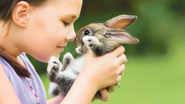 Una vida vegana no contempla solo no comer seres vivos, sino también no consumir ningún producto que haya implicado un daño para ellos, desde camperas y muebles de cuero a cosméticos con testeos en animales