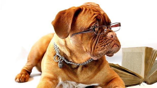 Los perros y su sentido del olfato pueden contribuir a la manera en la que se detecta la hipoglucemia