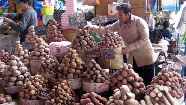 En Perú hay más de 4000 variedades de papa identificadas, cada una adaptada a un tipo de suelo y clima