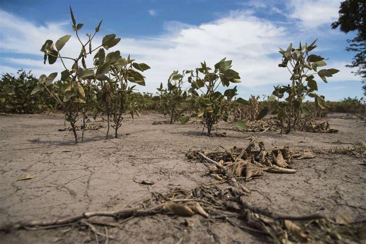 La soja, afectada por la falta de precipitaciones en Sanford, Santa Fe