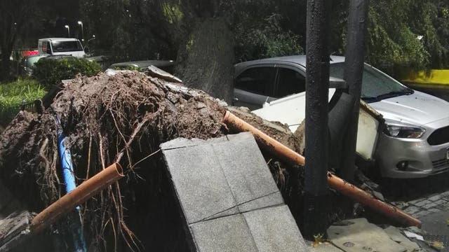 Un árbol cayó sobre un auto en Migueletes y Libertador