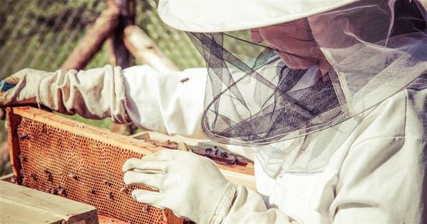 La Argentina es el tercer proveedor mundial de miel, detrás de China y Turquía