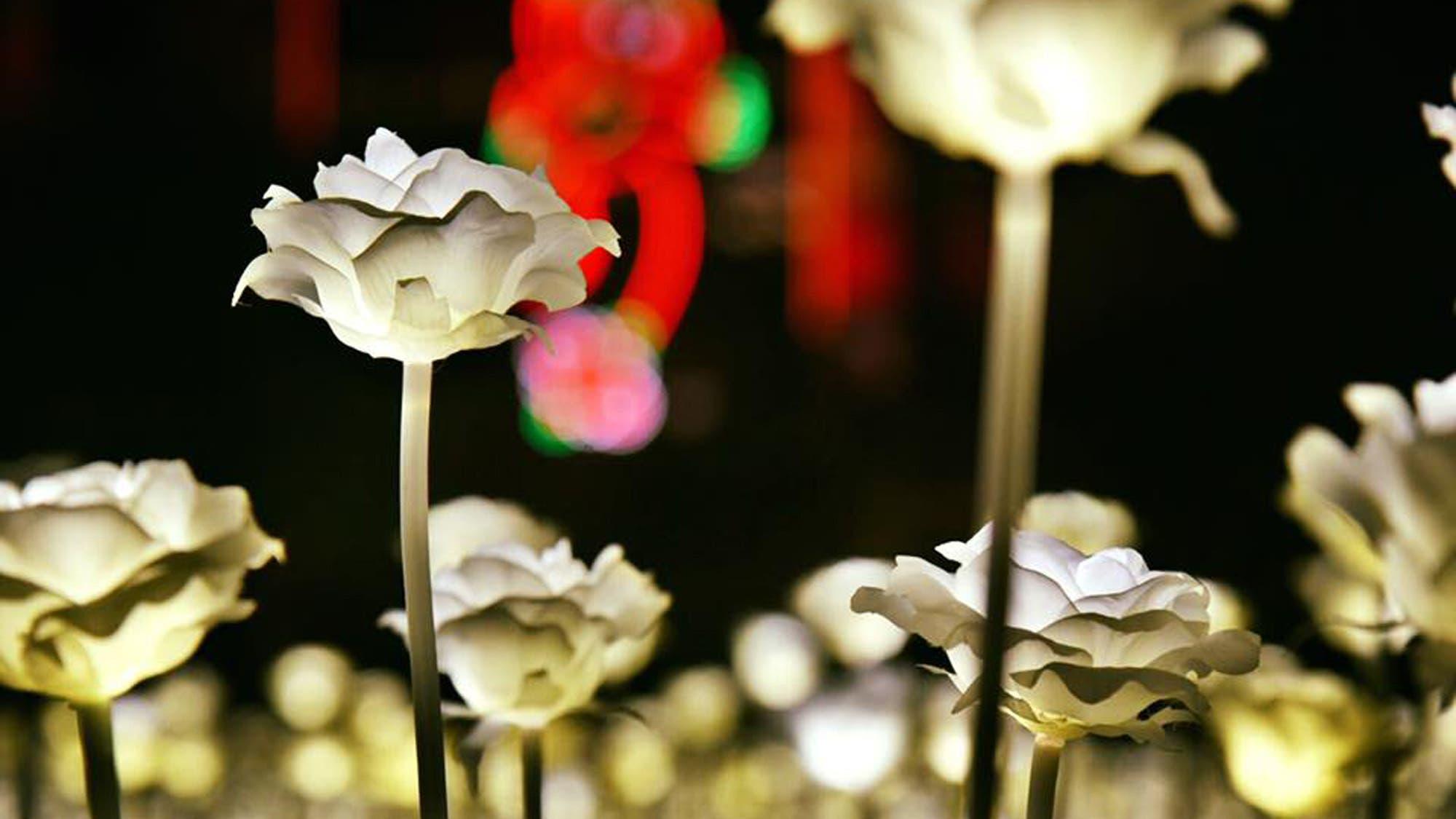 Un mar de rosas luminosas llegó a China