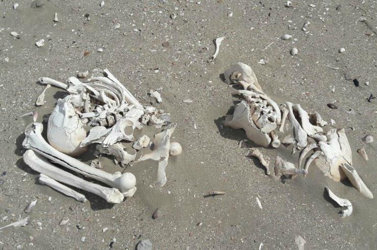 Se trataría de huesos de al menos 3 mil años de antigüedad