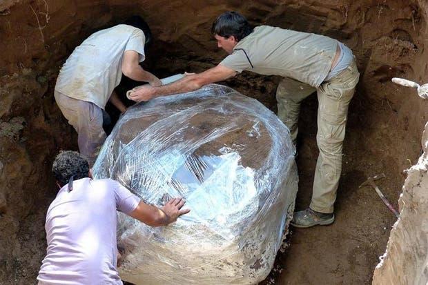 Encuentran en Córdoba restos de un gliptodonte de 40.000 años de antigüedad