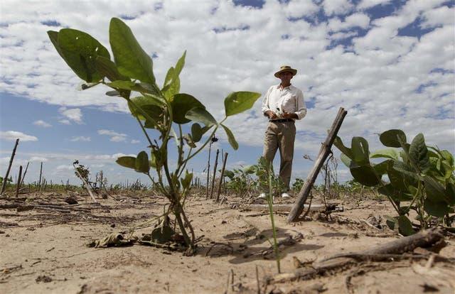 José Luis Schahovskoy, en su campo de Las Breñas, muestra los cultivos de soja afectados por la sequía