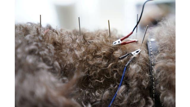 Detalle del tratamiento con acupuntura en un perro