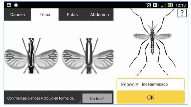 """La nueva aplicación """"cazamosquitos"""" da la oportunidad de ser un poco científicos"""